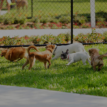 Large Dog Park at Galleria Townhomes & Casa Galleria Apartments